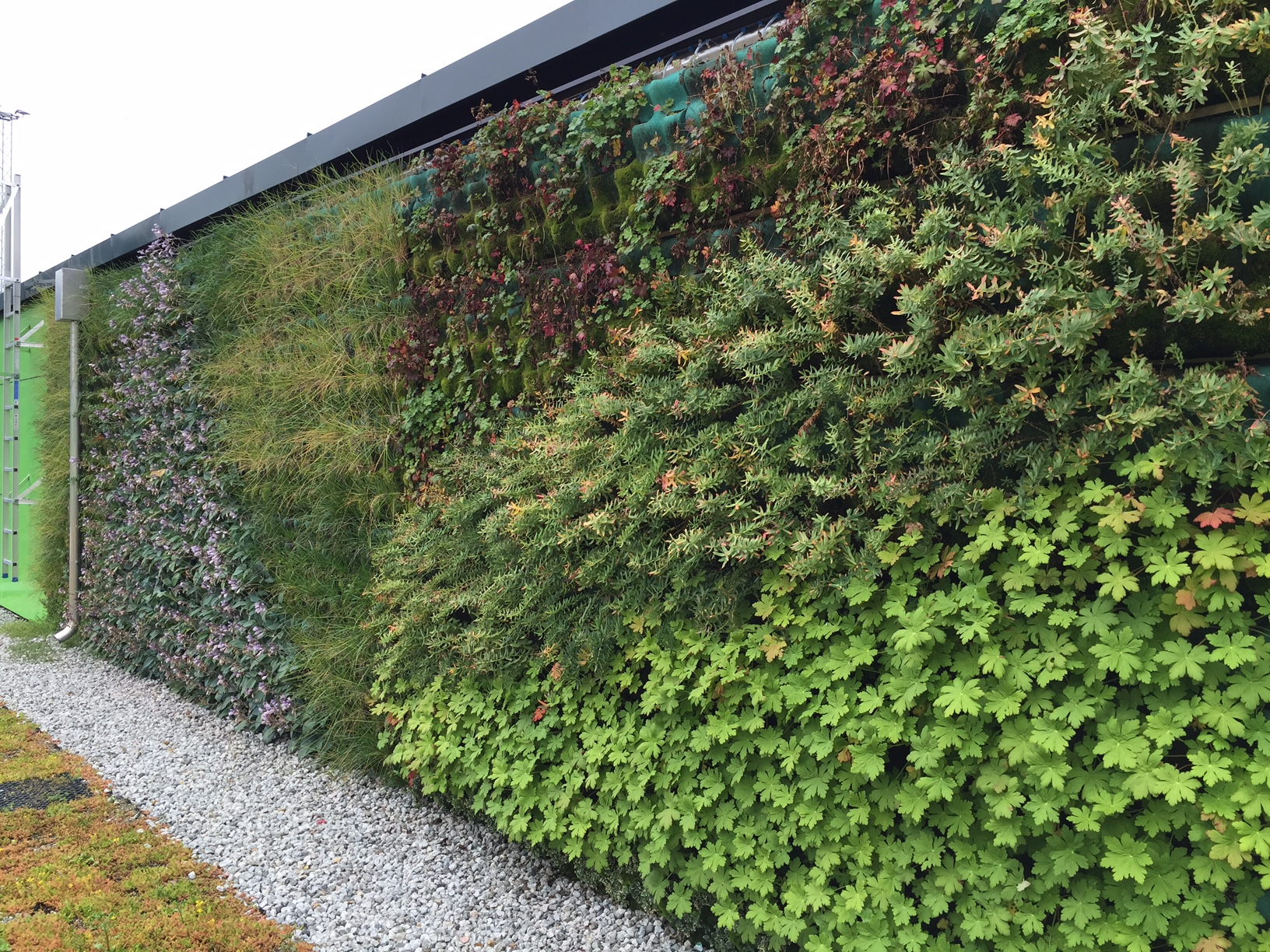 Klatreplanter smyg seg opp langs veggen. Staudar veks i kamp mot tyngekrafta. Fleire og fleire nordmenn vil ha vertikale hagar.